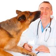Qué estudiar para ser veterinario